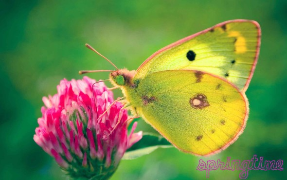 Clover-and-Butterfly